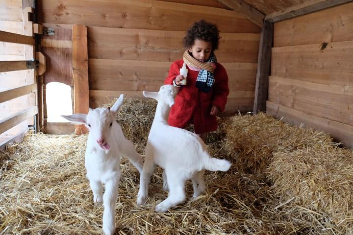 boerderij t geertje-4456