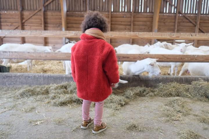 boerderij t geertje-4491