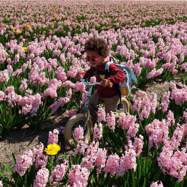bloemen-5948-2.jpg