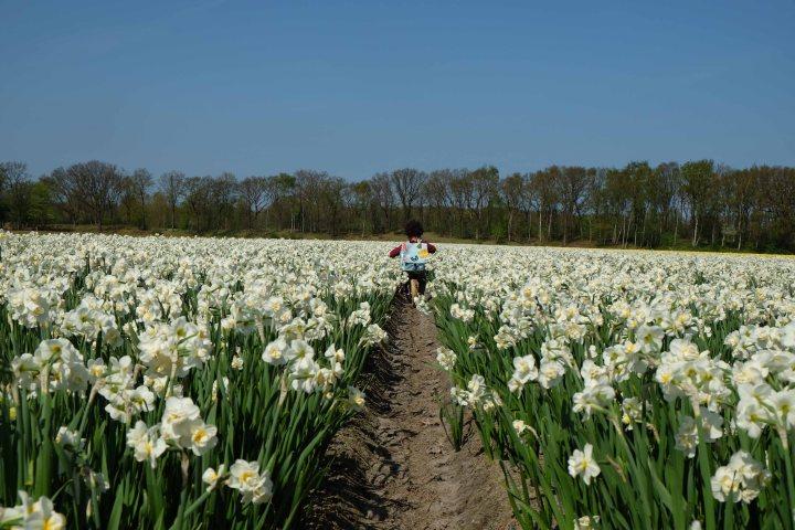 bloemen-5975.jpg